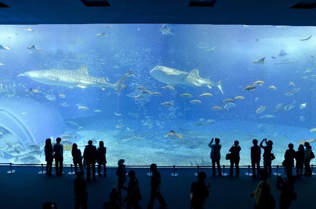 夢占い魚の夢の意味22選!金運と恋愛運に影響大大大!