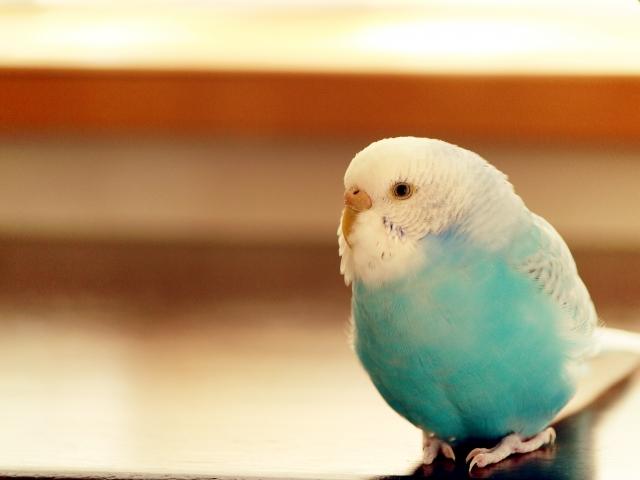 夢占い小鳥の夢の意味10選!不満が溜まって爆発しそう?