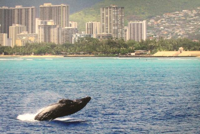 夢占いクジラの夢の意味!あなたの未来は決まっている?