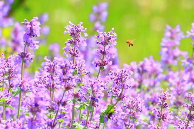 夢占い蜂の夢の意味!大きさや状況別の診断結果20選!