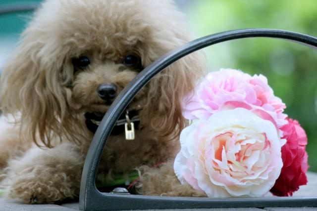 夢占い子犬の夢の意味21選!幸運を呼び込む吉夢がたくさん