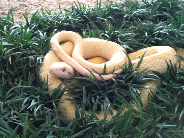 夢占い蛇の夢の意味!大蛇や白いへびなど30選と開運法