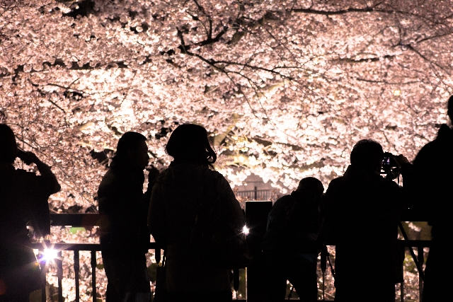 桜の夢の意味とは?(後編)9パターンの解釈!