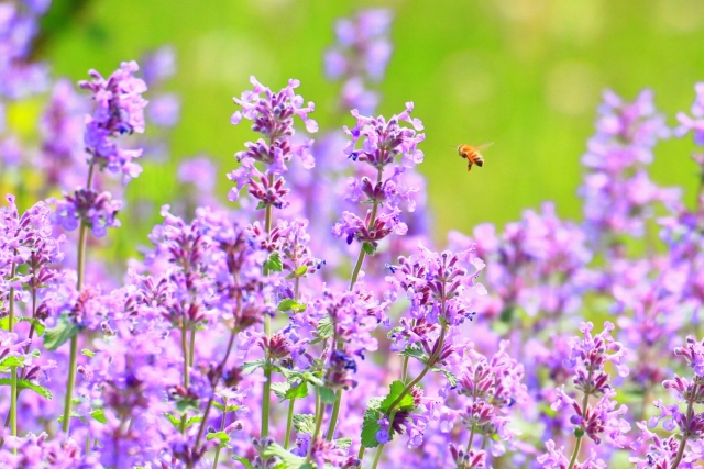 夢占い蜂の夢の意味!大きさや状況別の診断結果26選!
