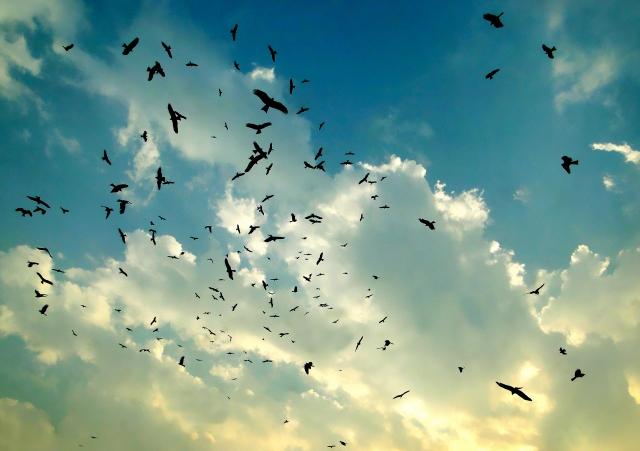 夢占い鳥の夢の意味20選!群れや死骸等吉凶の暗示と助言!