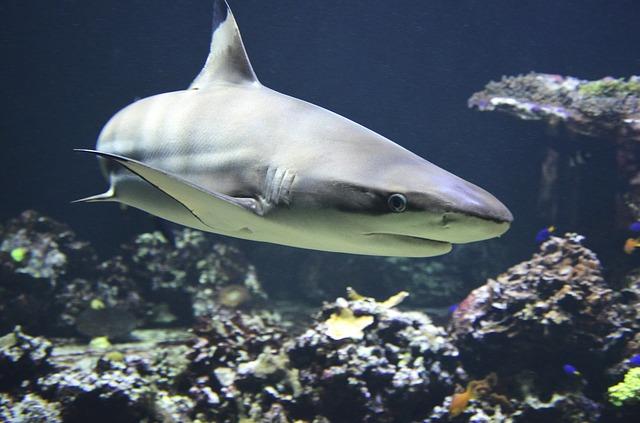夢占いサメの夢の意味20パターン!対人関係の転機が訪れる