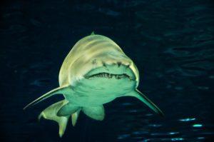 に られる サメ 夢 食べ