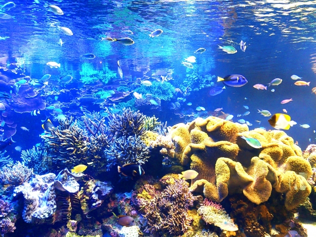 深海の夢の意味を夢占いで診断20選!意思の固さが分かる?
