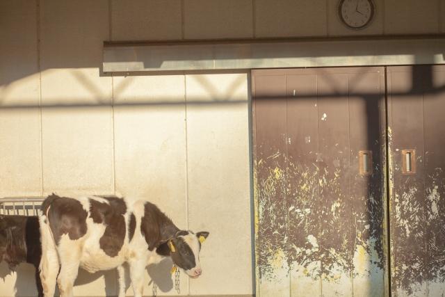 夢占い牛の夢の意味診断10選!金運UPの重大なメッセージ
