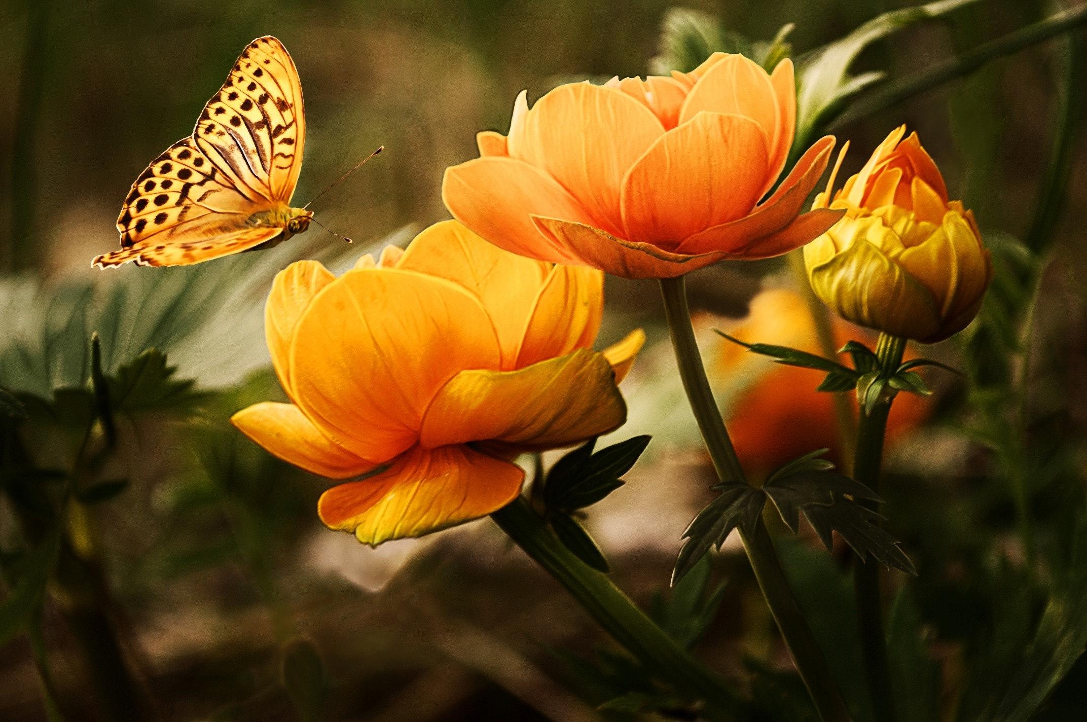 夢占いで24種類の草花の夢の意味を診断!吉夢がたくさん!