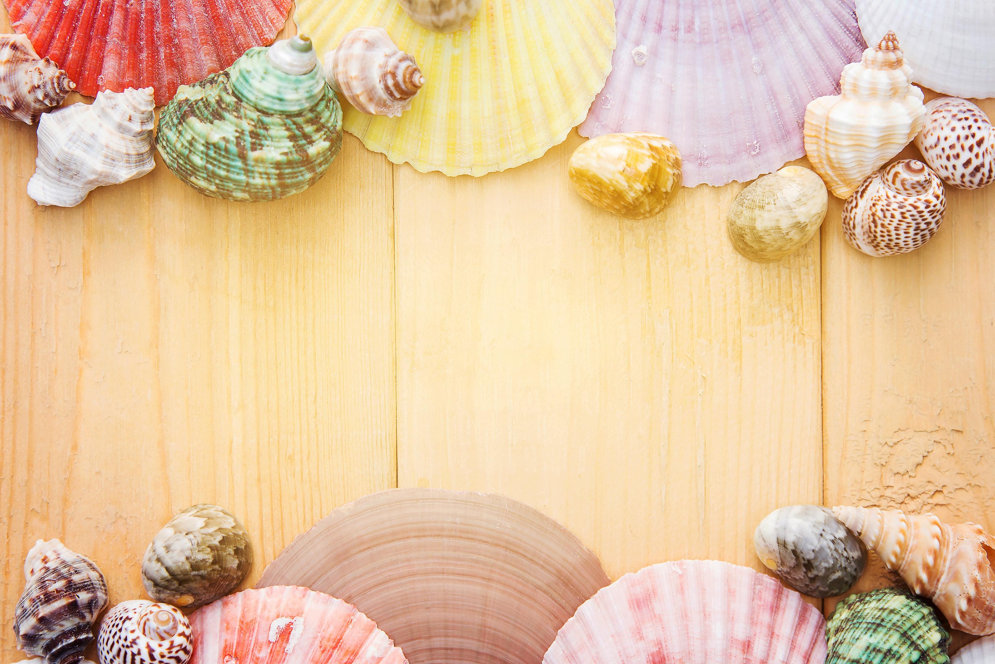夢占い貝の夢の意味診断20選!種類や状態で異なる吉と凶